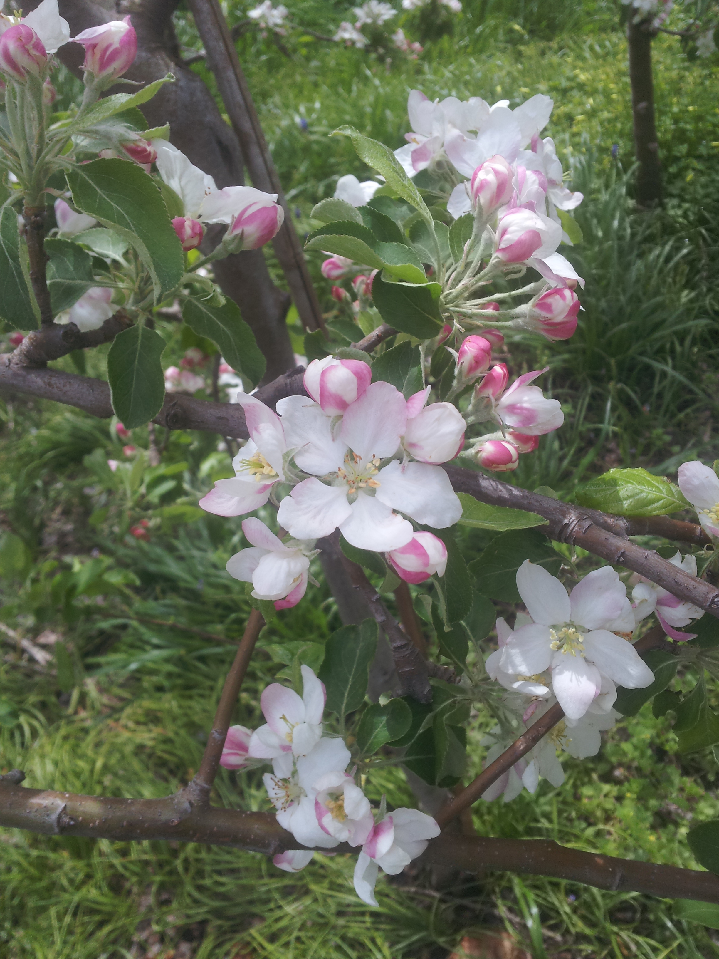 Its Blooming Time For Quality Fruit